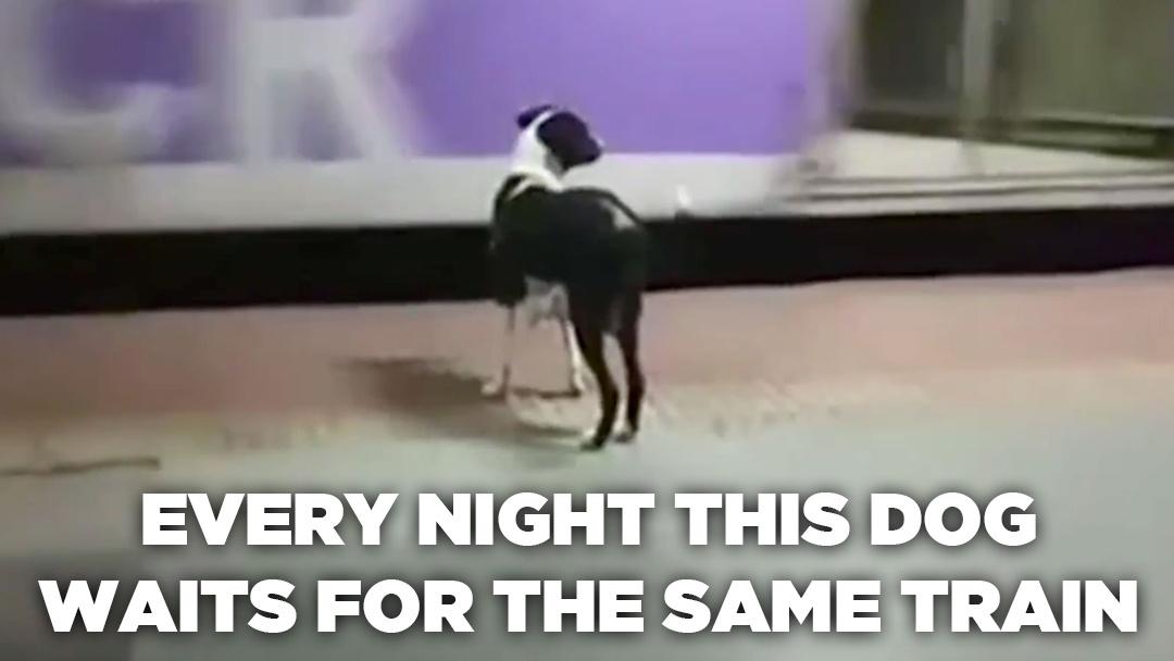 A Dog Waiting For A Train, Again